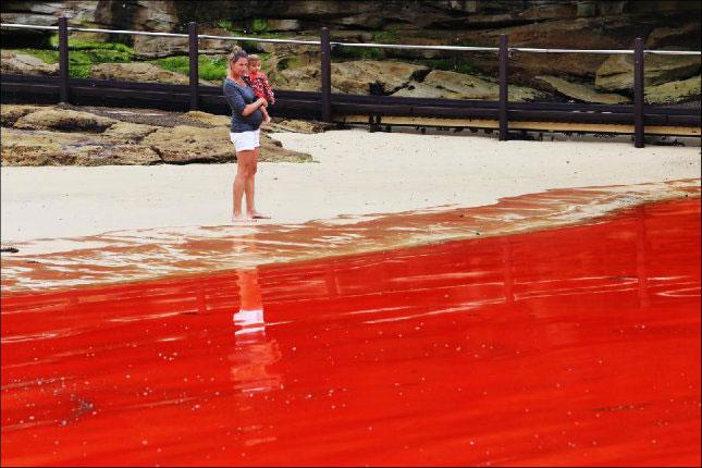 Sắc màu thủy triều đỏ